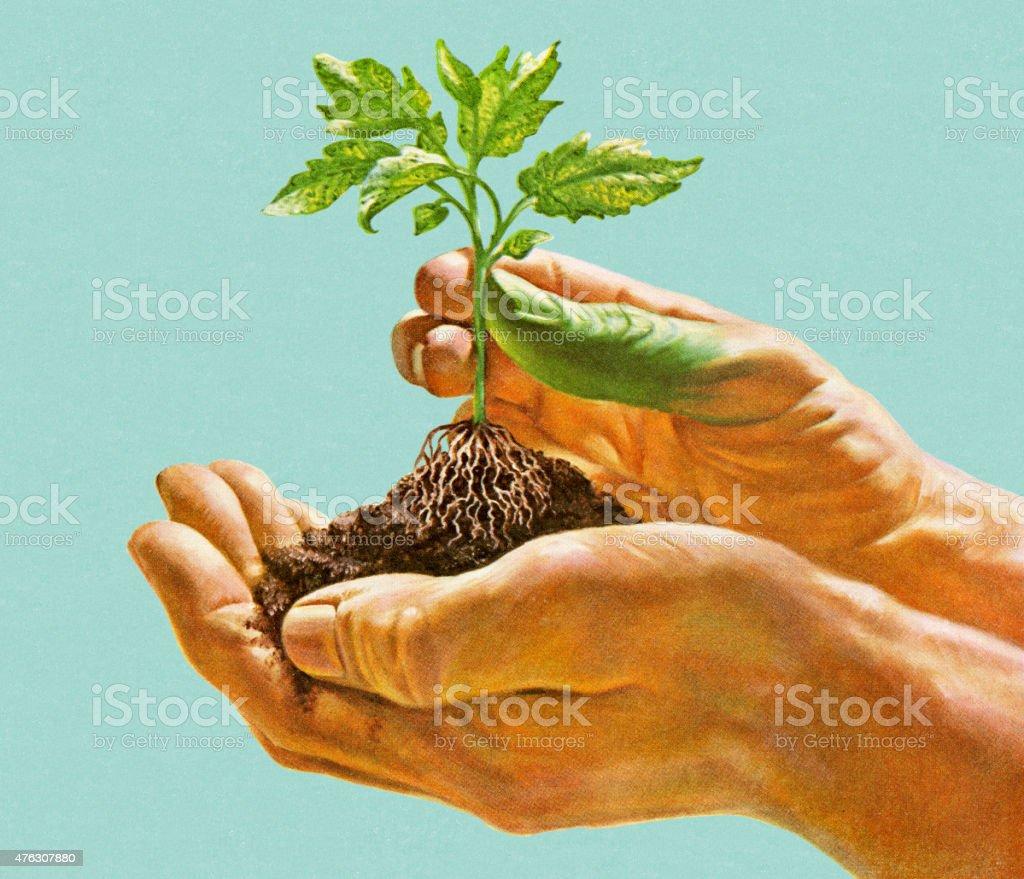 Hands Holding Seedling vector art illustration
