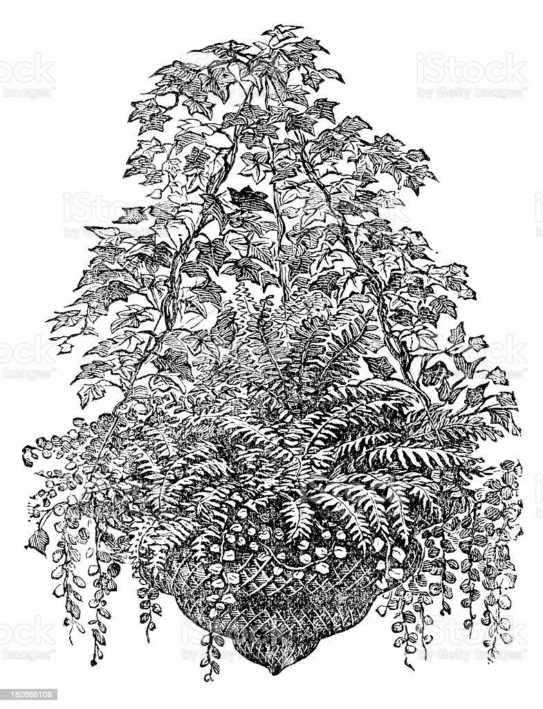 hanging plants engraving vector art illustration