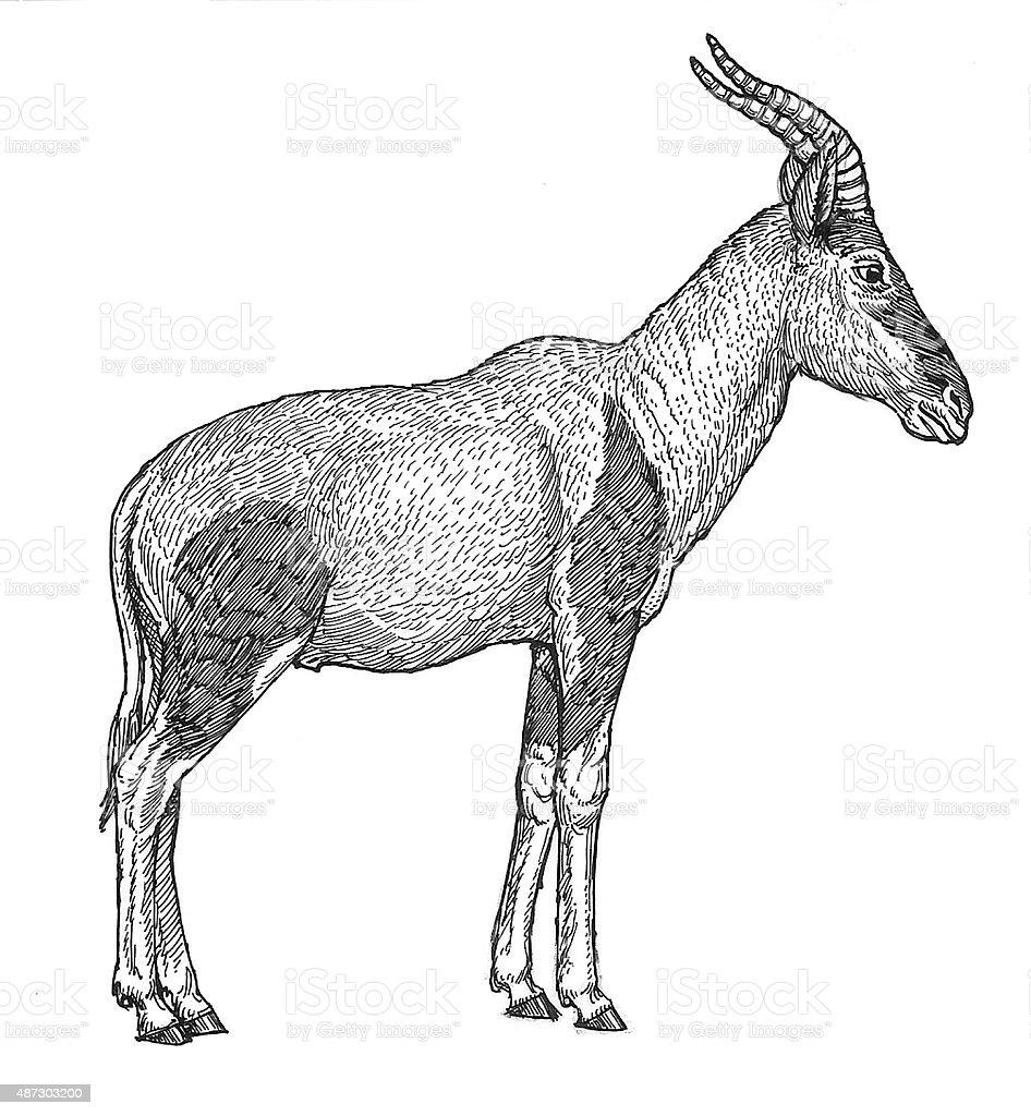 Hartebeest Antelope Lizenzfreies vektor illustration