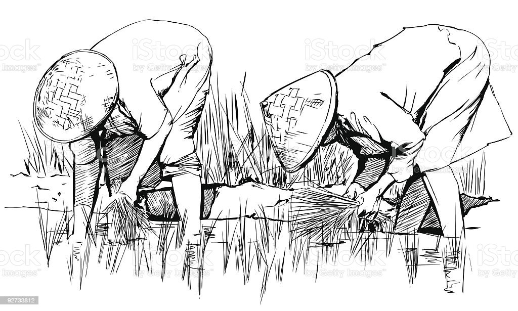 harvesting rice in asia vector art illustration