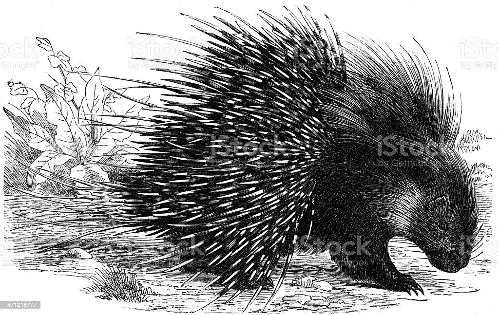hedgehog vector art illustration