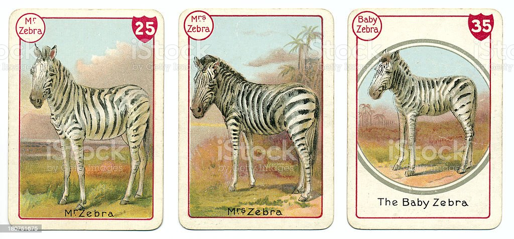 Three zebra playing cards Victorian animal families game vector art illustration
