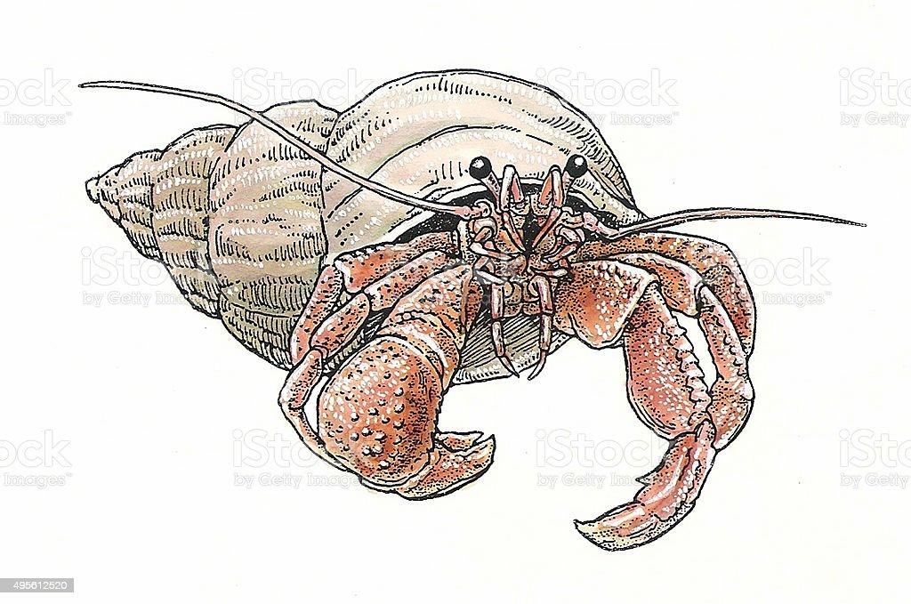 Einsiedlerkrebs Lizenzfreies vektor illustration