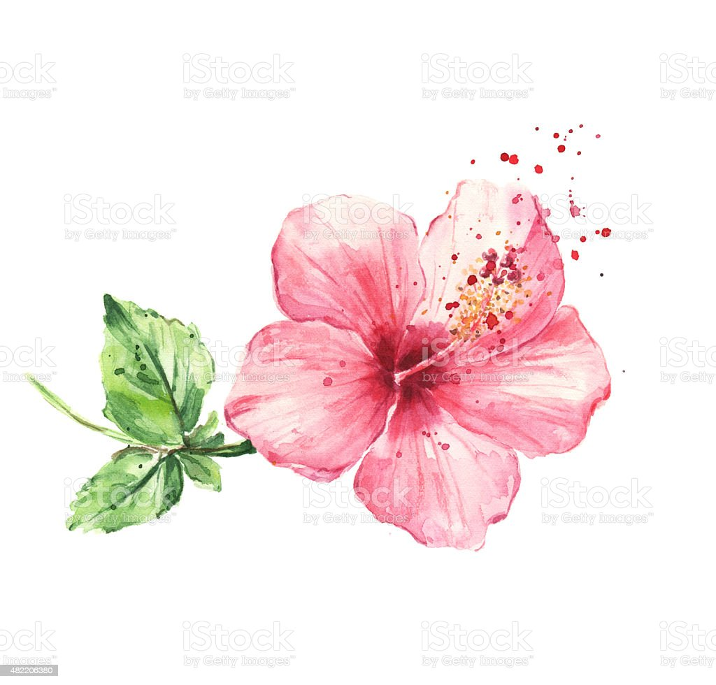 Hibiscus flower, Watercolor painting vector art illustration