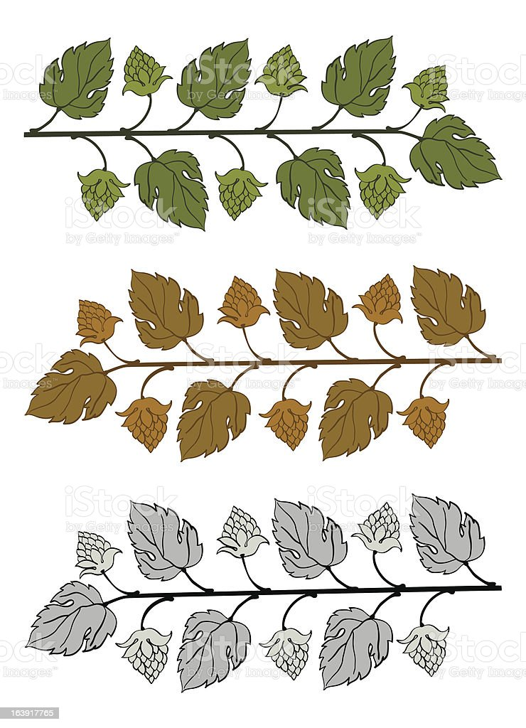 Hop Branches With Leaves and Cones vector art illustration