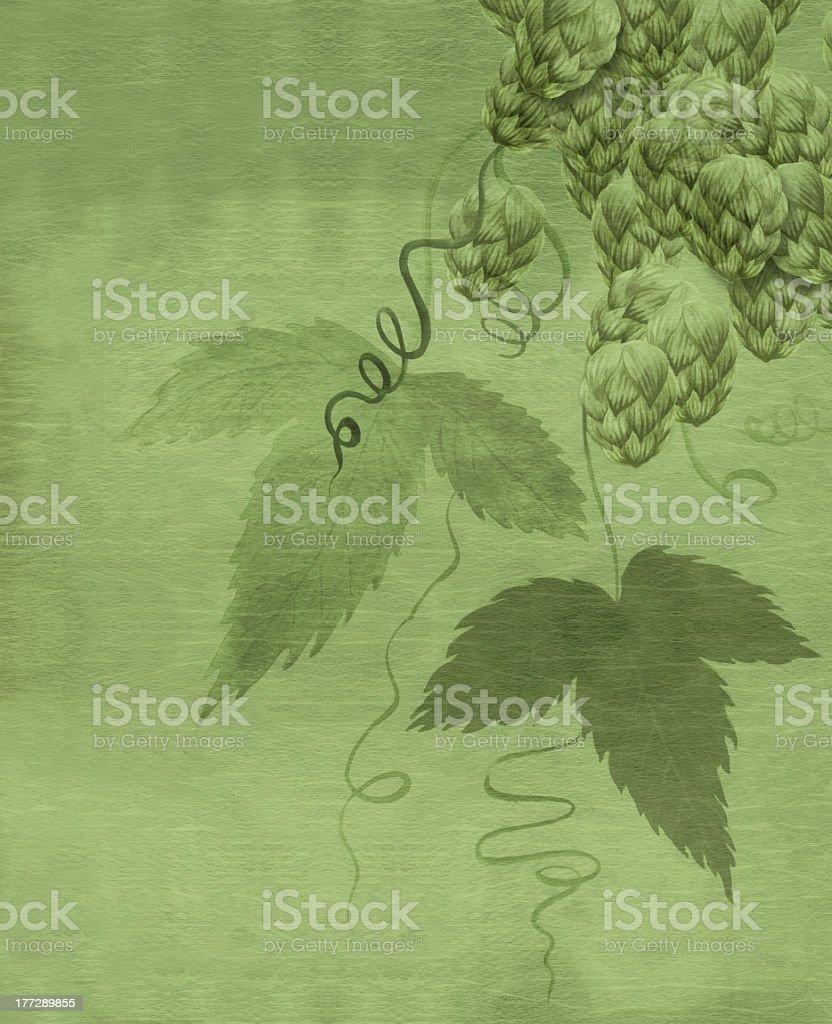 Hops Plant Painting vector art illustration