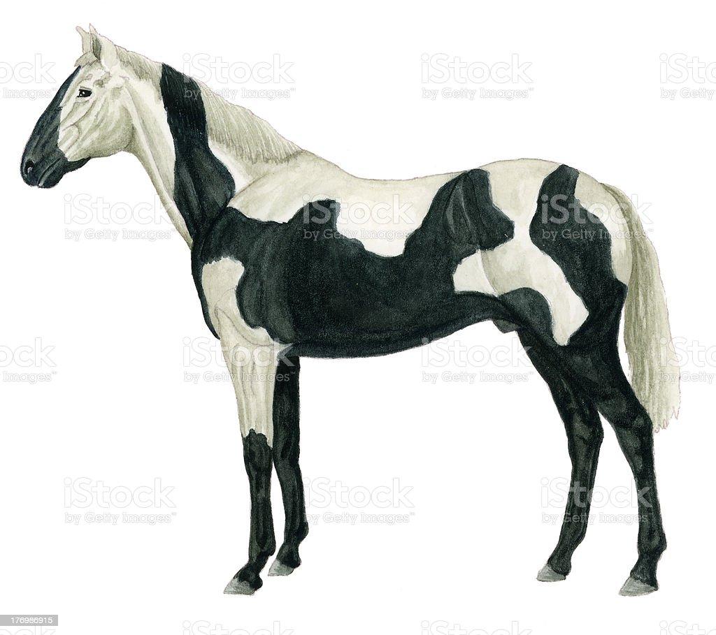 Horse black pio royalty-free stock vector art