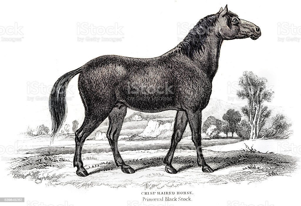 Horse Engraving 1841 vector art illustration