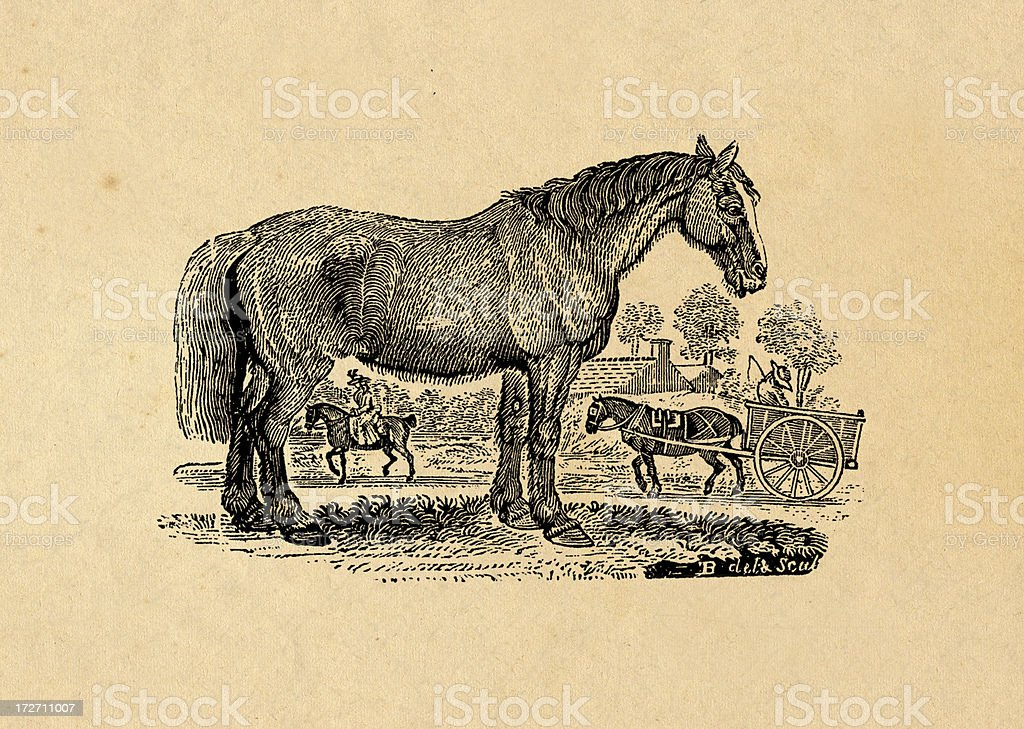 Horse royalty-free stock vector art