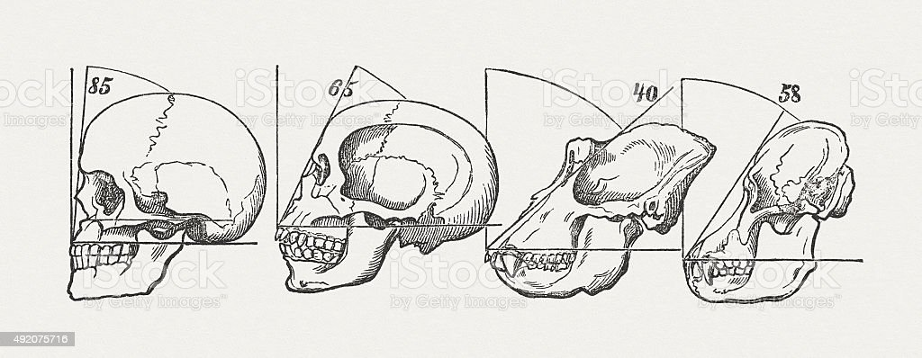 Human and ape skulls, published in 1884 vector art illustration