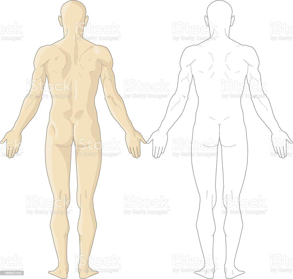 Human body royalty-free stock vector art