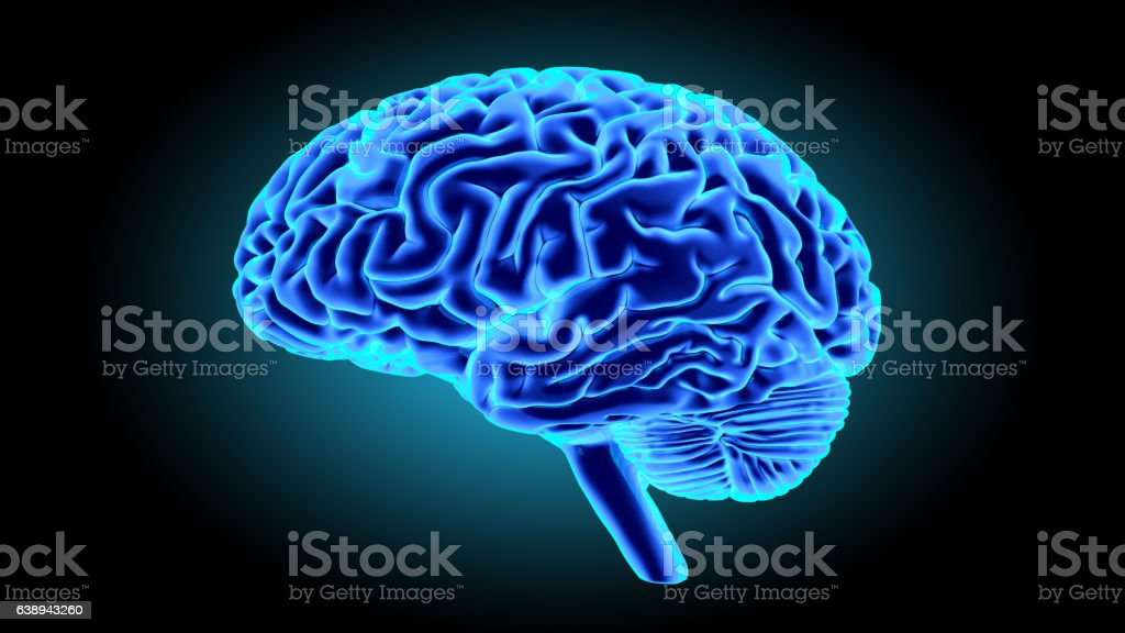 Human Brain 3d Render Vektor Illustration 638943260 | iStock