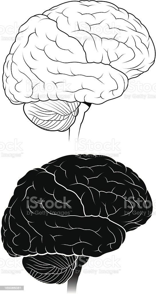 Human brain-Black and white royalty-free stock vector art