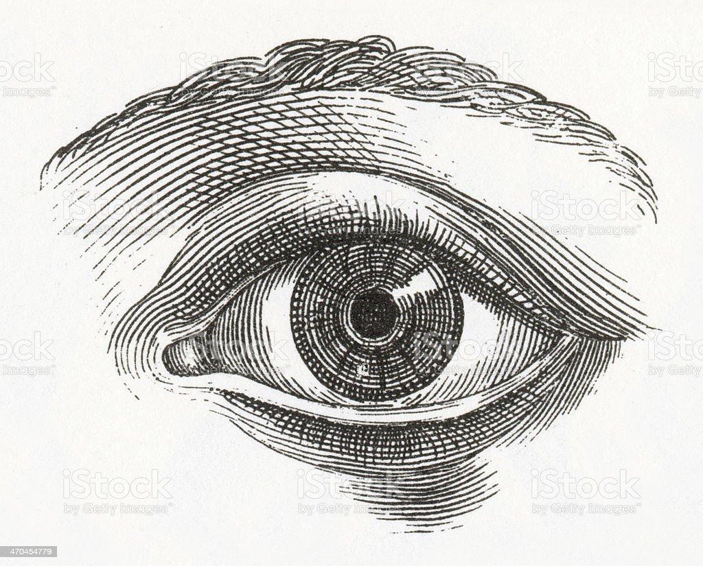 Human Eye Engraving vector art illustration