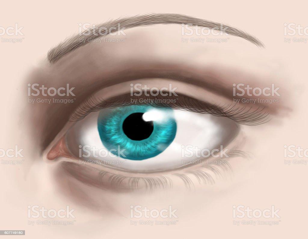 Human Eye vector art illustration