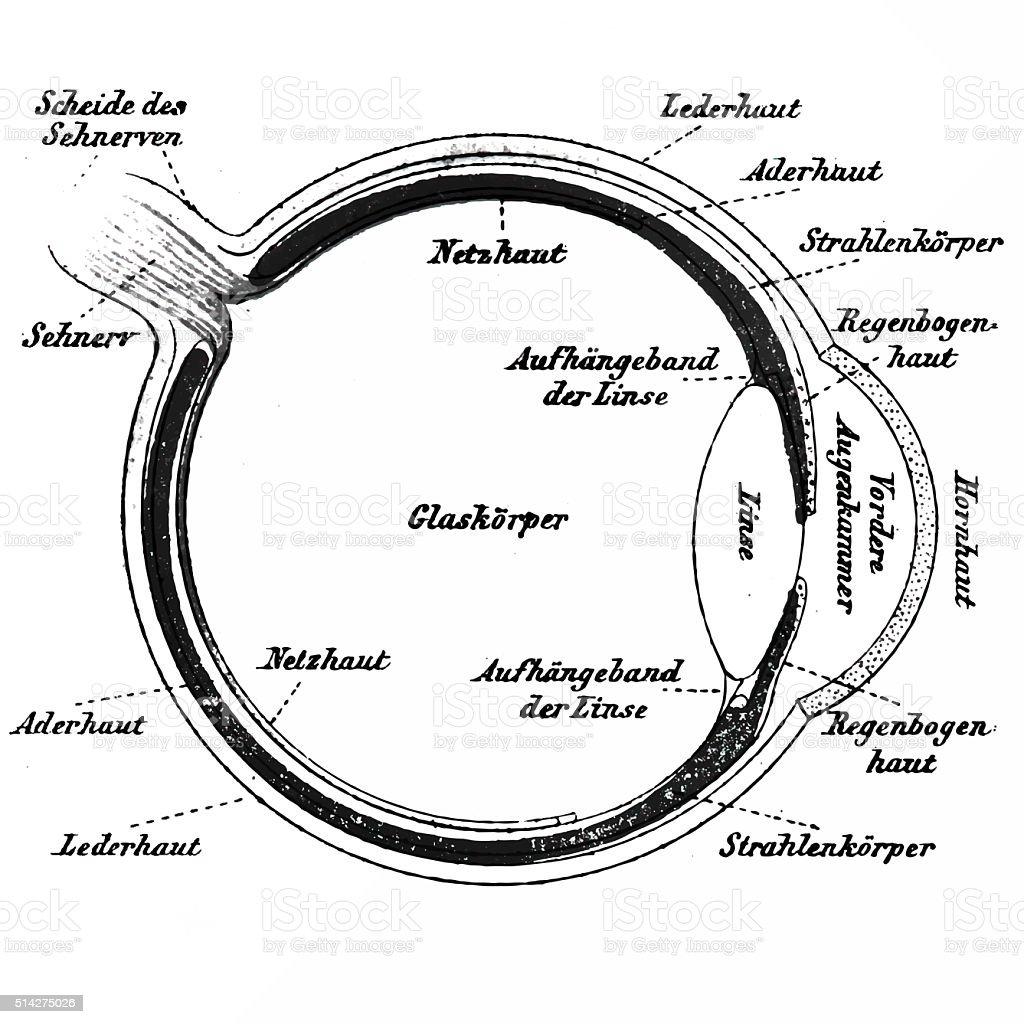 Human eye, published in 1898 vector art illustration