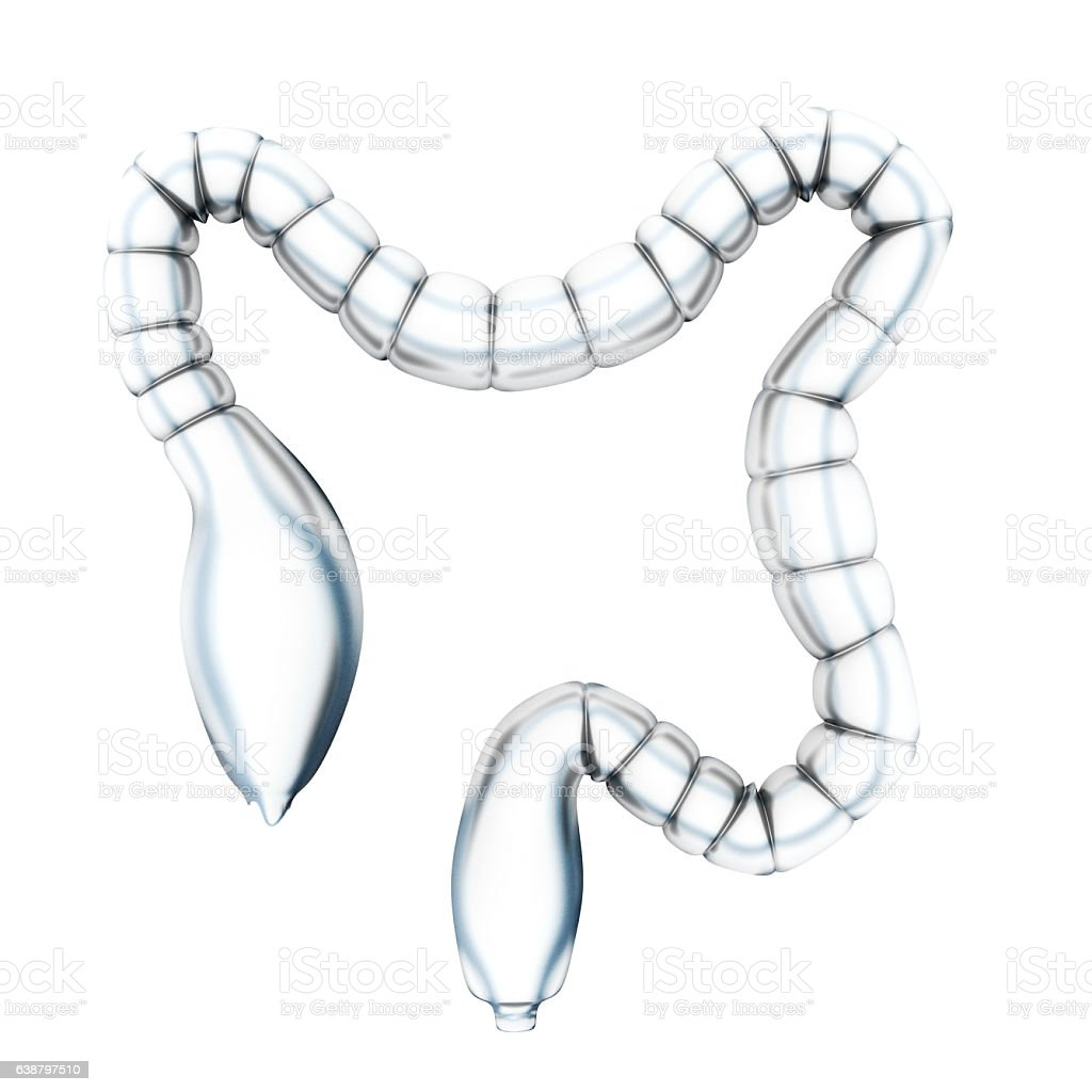 Human Large Intestine vector art illustration