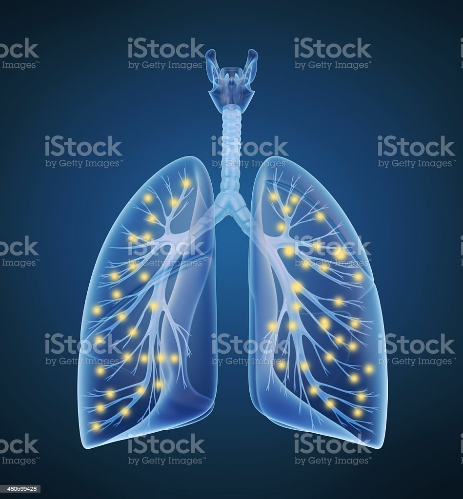 Human lungs and bronchi and oxygen in x-ray view vector art illustration