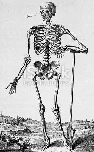squelette humain stock vecteur libres de droits 471285771 istock. Black Bedroom Furniture Sets. Home Design Ideas