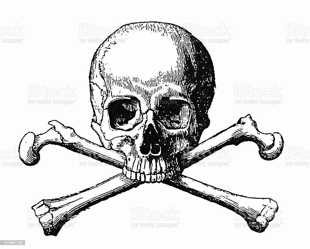 Human Skull and Bones vector art illustration