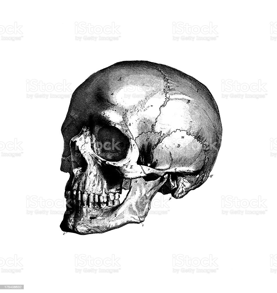 Human Skull | Antique Medical Scientific Illustrations and Chart vector art illustration