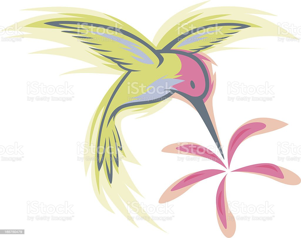 humming bird design royalty-free stock vector art