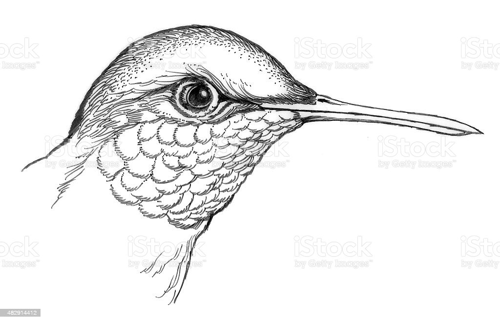 Kolibri Head Lizenzfreies vektor illustration