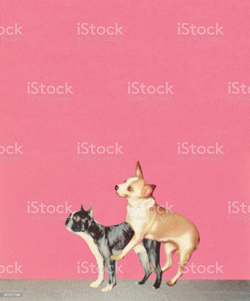 Humping Dogs vector art illustration