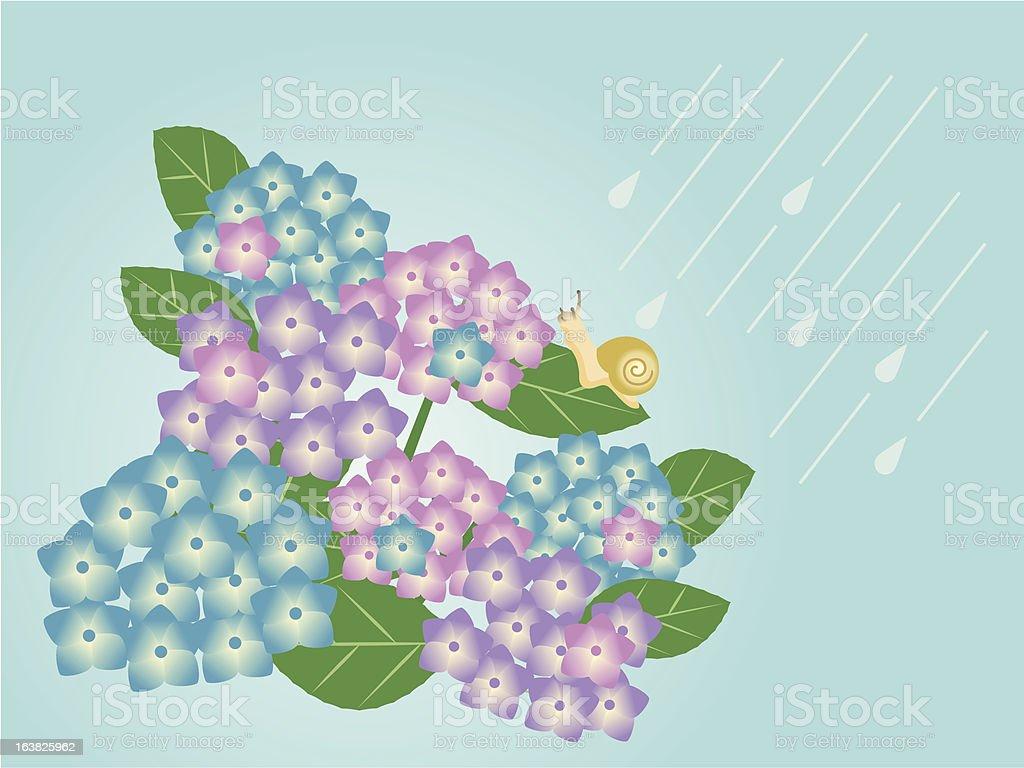 Hydrangea and snail royalty-free stock vector art