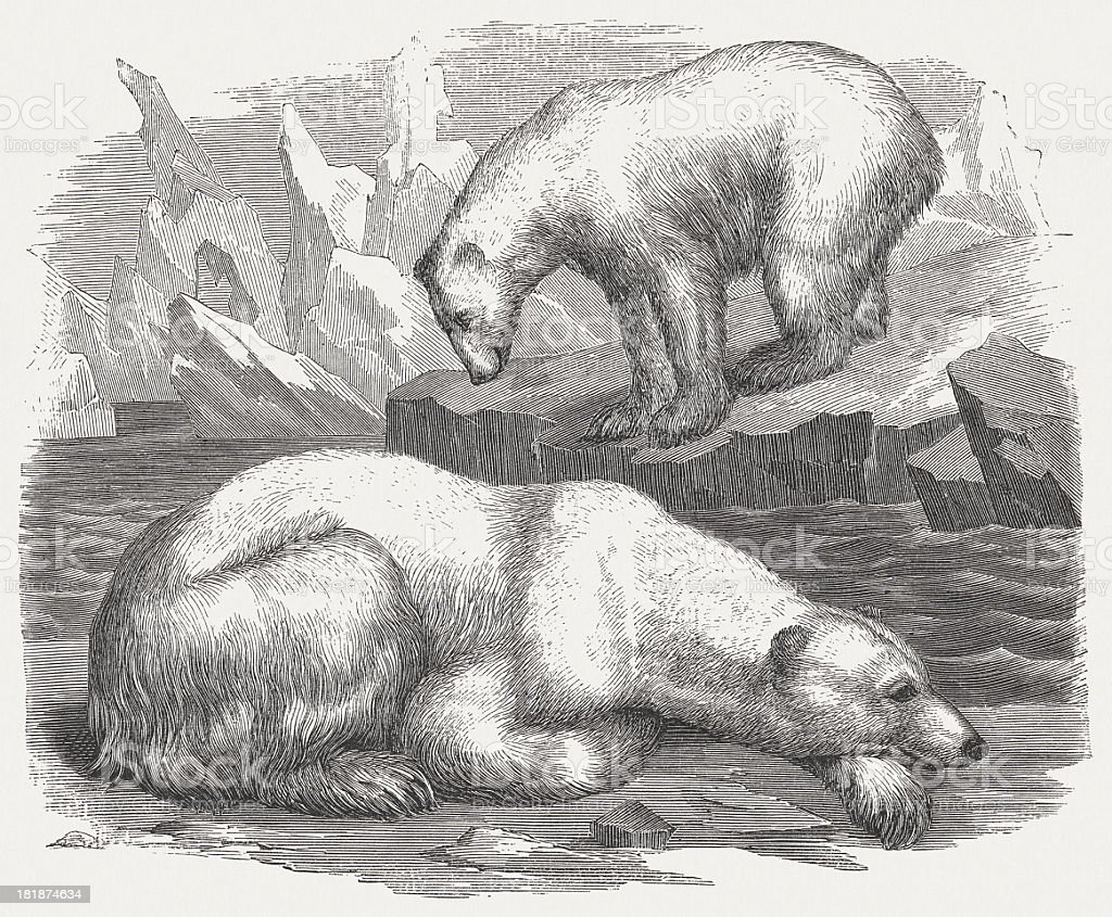 Ice bears, wood engraving, published in 1875 vector art illustration
