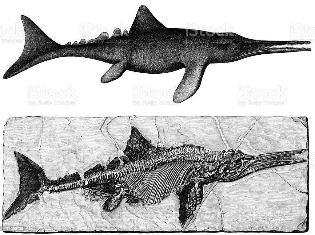 Ichthyosaurus fossil royalty-free stock vector art