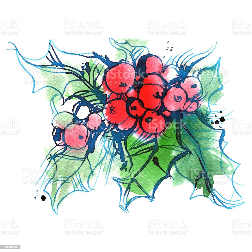 ilex, green sprig of holly with red berries vector art illustration