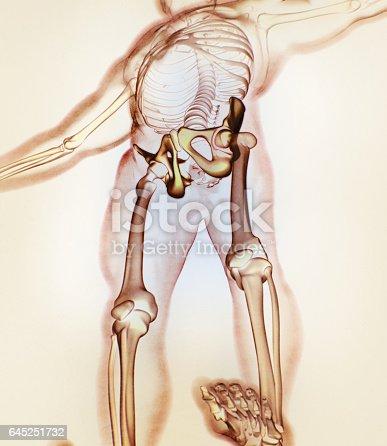 ilium bone hip bone pelvis human anatomy skeletal structure xray, Skeleton