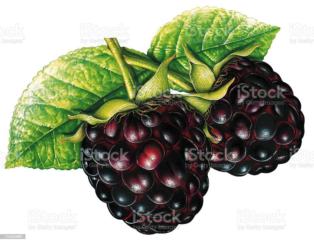 Illustrated Blackberry royalty-free stock vector art