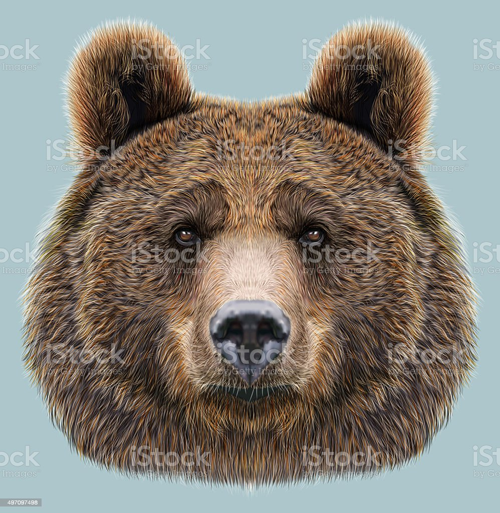 Illustrated Portrait of Bear on blue background vector art illustration