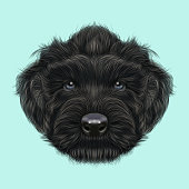 Illustrated Portrait of Black Russian Terrier dog.