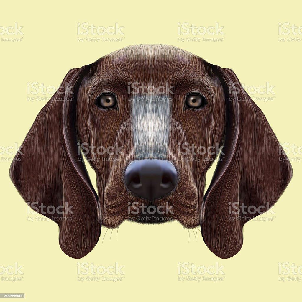 Illustrated portrait of German Shorthaired Pointer dog vector art illustration