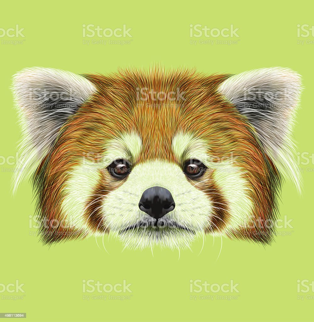 Illustrated Portrait of Red Panda vector art illustration