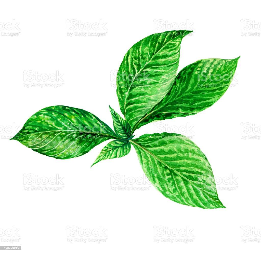 illustration of exotic leaves vector art illustration