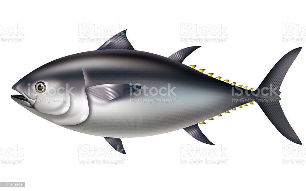 Illustration of Pacific bluefin tuna. vector art illustration