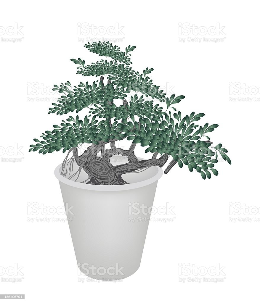 illustration of small banyan tree in flower pot stock vector art