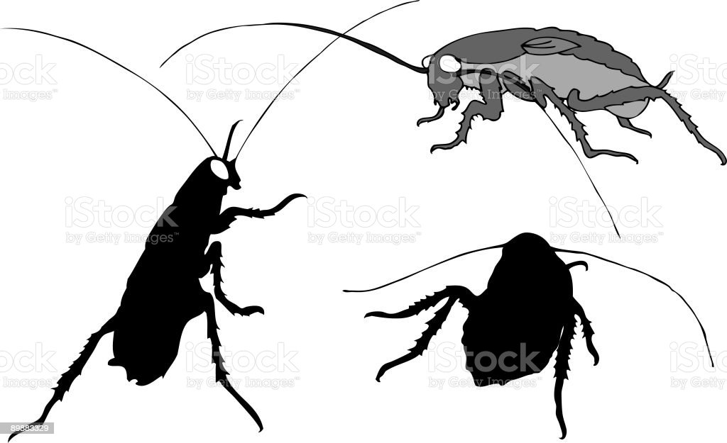 Illustration of three cockroaches royalty-free stock vector art