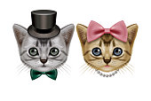 Illustration of two short hair cats.