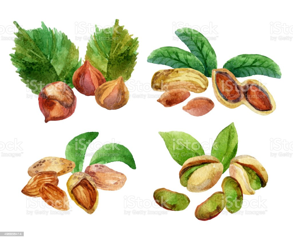 Illustration with different isolated watercolor nuts vector art illustration