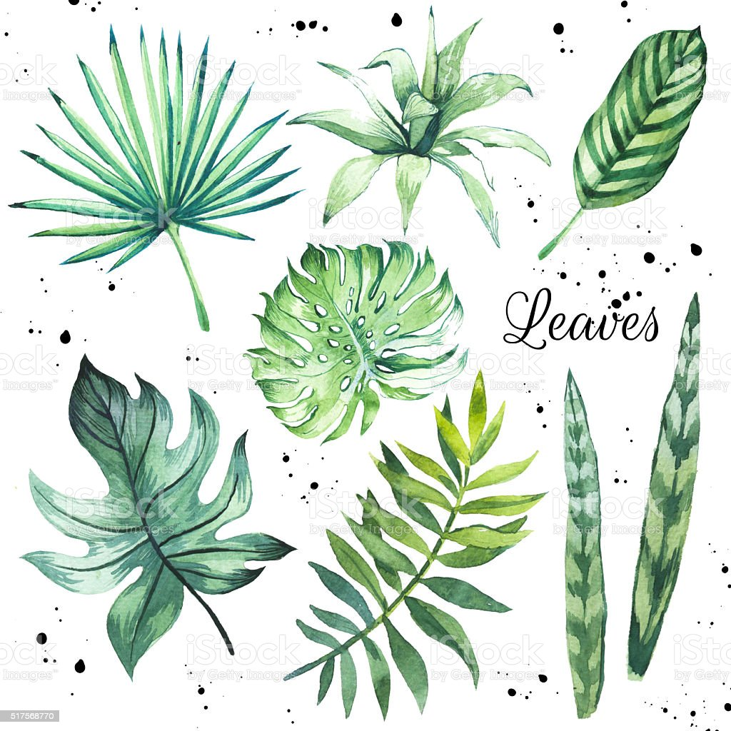 Illustration with tropical watercolor green leaves. stock photo