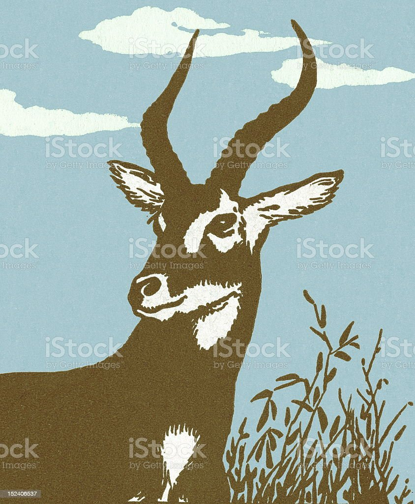 Impala vector art illustration