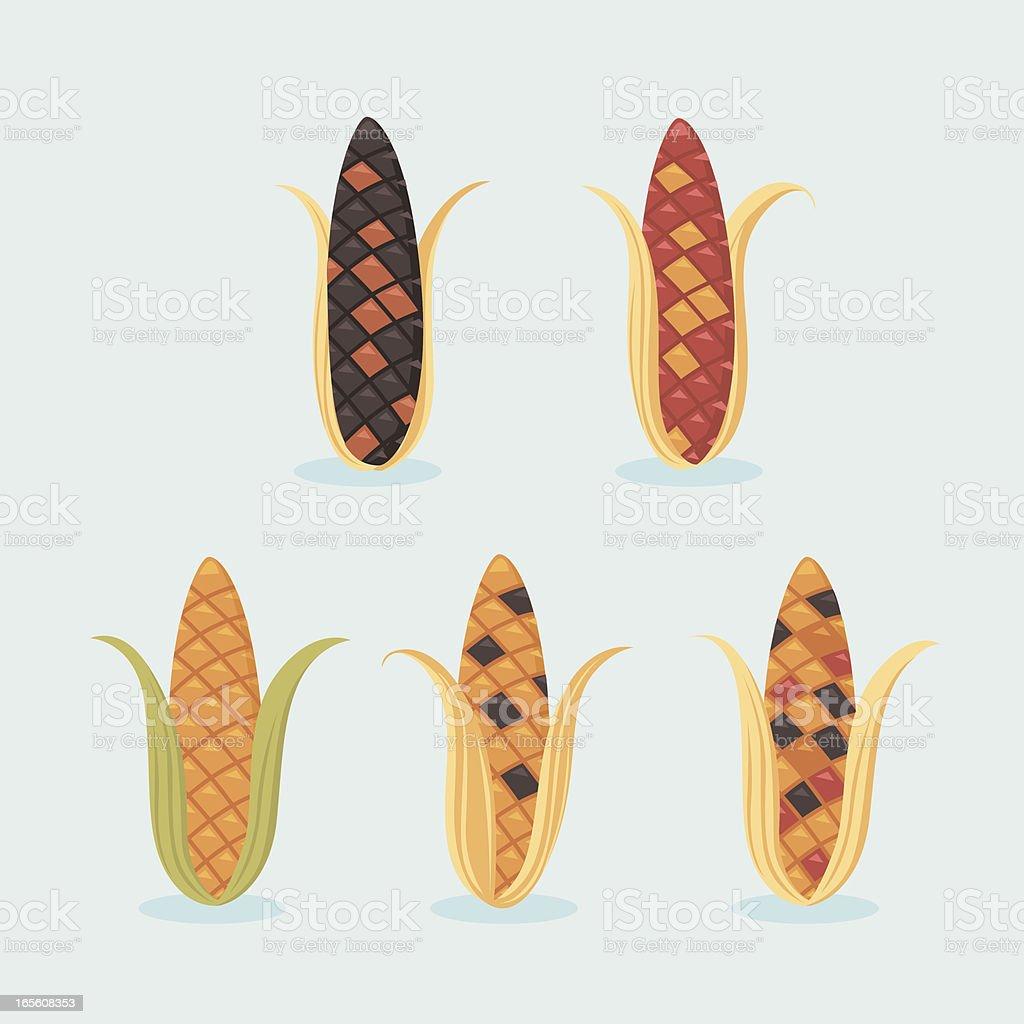 Indian corn vector art illustration