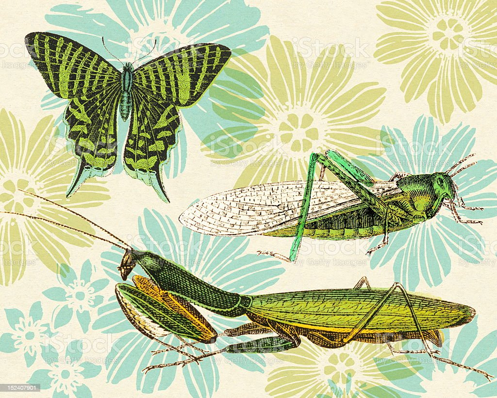 Insects and Flower Pattern vector art illustration
