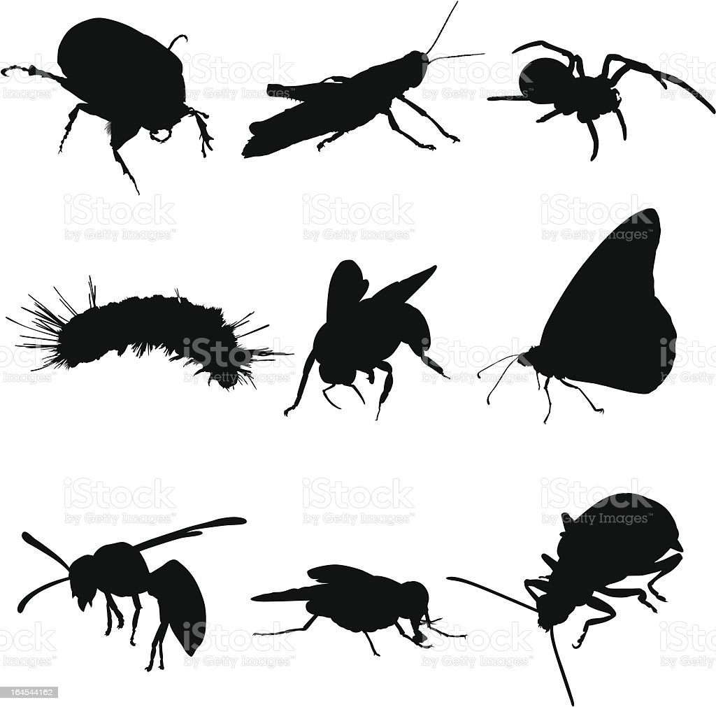 Insects Bugs and Spiders vector art illustration