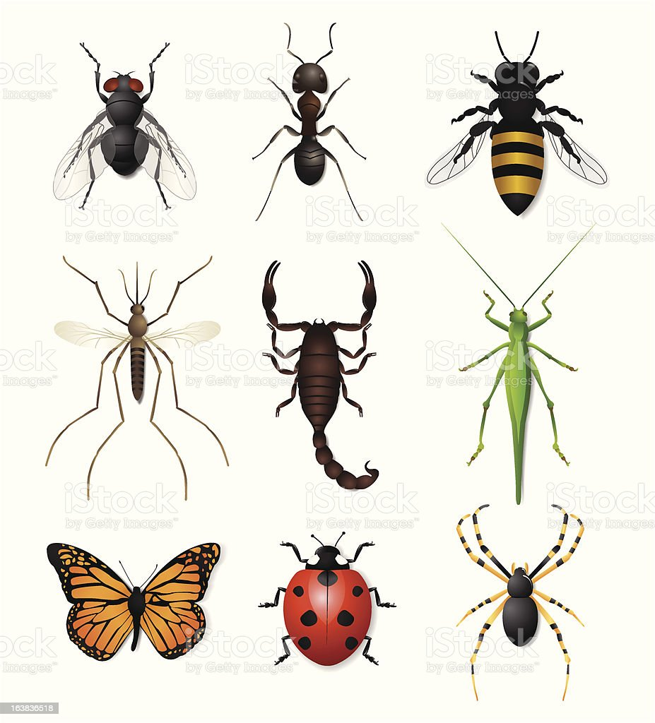 Insects icon set royalty-free stock vector art
